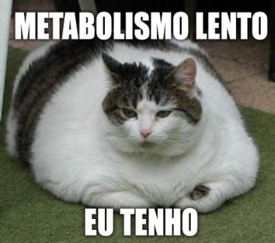 metabolismo-lento_gato